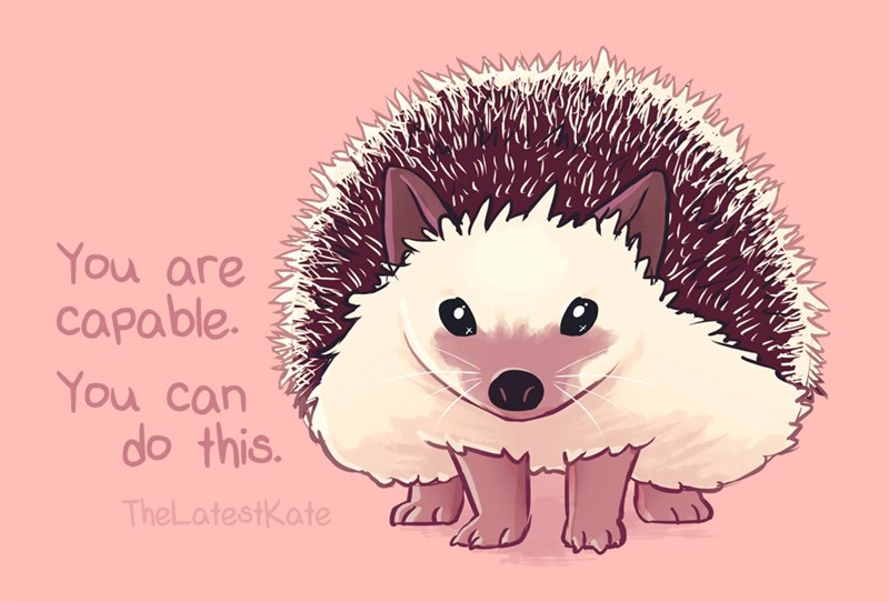 kind words - Hedgehog - You are capable. You can do this. TheLatestKate
