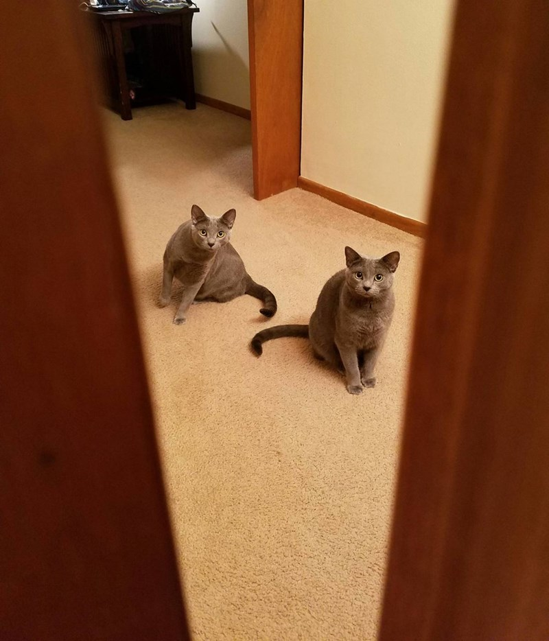 peeking,curious,twins,Cats
