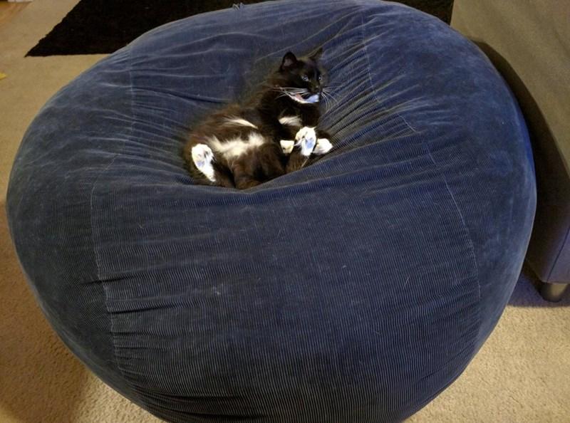 bean bag if i fits i sits Cats comfortable - 9006402304