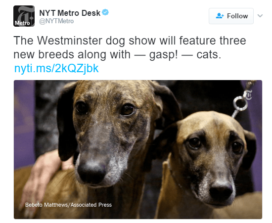 Dog - NYT Metro Desk' Follow Metro @NYTMetro The Westminster dog show will feature three new breeds along with gasp! -cats nyti.ms/2kQZjbk Bebeto Matthews/Associated Press