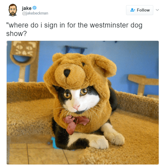 "Plush - jake @jakebeckman Follow ""where do i sign in for the westminster dog show?"