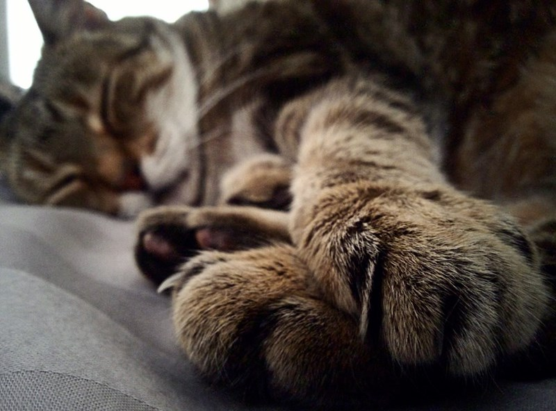 close up Cats sleeping - 9006647296