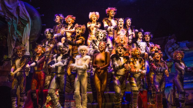 cats the musical plot explained