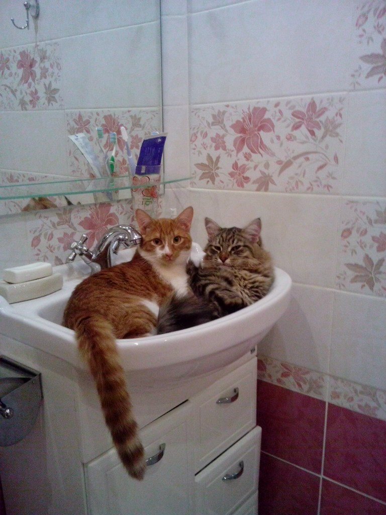sink Cats - 9006944512