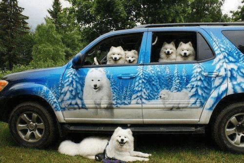 doggo - 9006948864