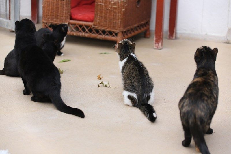 Cute picture of a whole bunch of cats looking upwards at something that is clearly going on.
