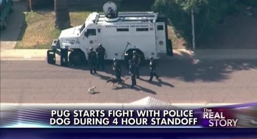 Motor vehicle - The PUG STARTS FIGHT WITH POLICE REAL DOG DURING 4 HOUR STANDOFF STORY