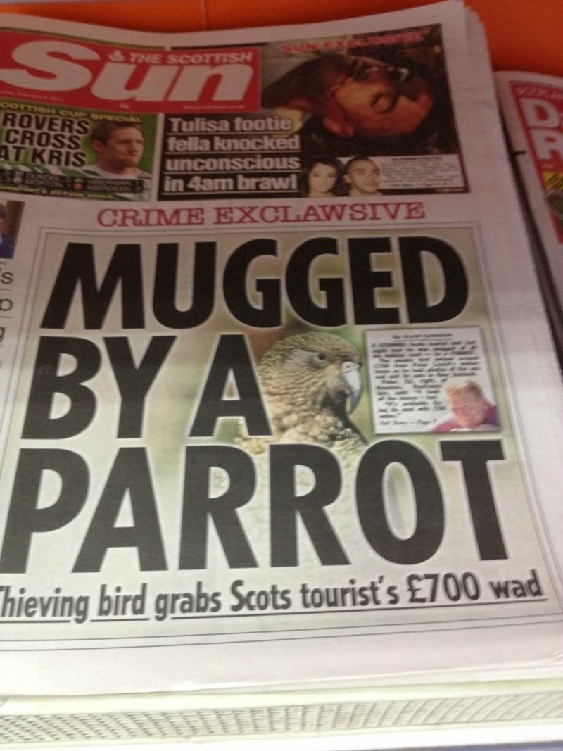 Newspaper - Sun THE SCOTTISH COTTIS CUPSr L ROVERS CROSS AT KRIS Tulisa footie fella knocked unconscious in 4am brawl CRIME EXCLAWSIVE MUGGED ΒΥΑΚΙ BY A PARROT hieving bird grabs Scots tourist's £700 wad