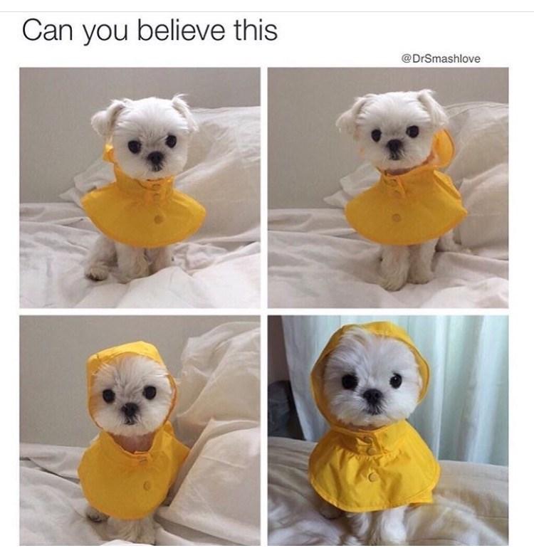 doggo pupper - 9007231232