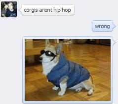 Vertebrate - corgis arent hip hop wrong