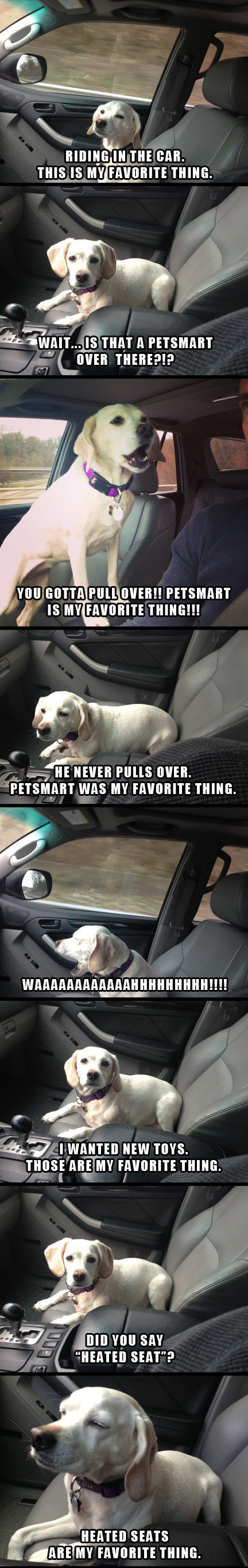 """Vehicle door - RIDING IN THE CAR. THIS IS MY FAVORITE THING WAIT.. IS THAT A PETSMART OVER THERE?I? YOU GOTTA PULOVER!! PETSMART IS MY FAVORITE THING!!! HENEVER PULLS OVER. PETSMART WAS MY FAVORITE THING. WAAAAAAAAAAAAHHHHHHHHH!!!! IWANTED NEW TOYS. THOSE ARE MY FAVORITE THING. DID YOU SAY CHEATED SEAT""""? HEATED SEATS ARE MY FAVORITE THING DD"""