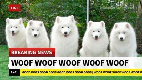 Mammal - breakyourowhnes.com LIVE E BREAKING NEWS WOOF WOOF WOOF WOOF WOOF GOOD DOGS GOOD DOGS GOOD DOGS GOOD DOGS WOOF WOOF WOOF WOOF WOOF W 9:47