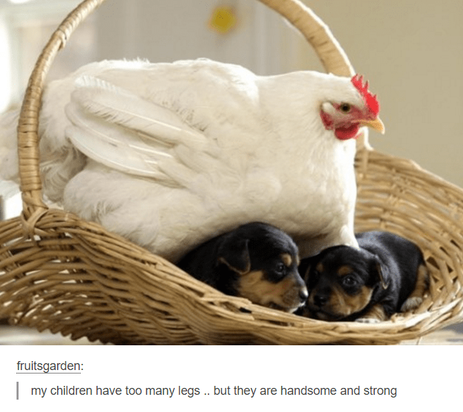 Chicken - fruitsgarden: my children have too many legs.. but they are handsome and strong