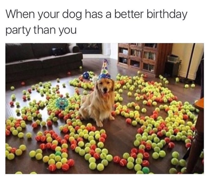 Dog - When your dog has a better birthday party than you
