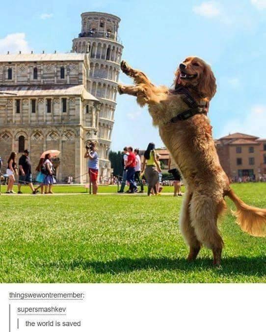 Dog - thingswewontremember: supersmashkev | the world is saved