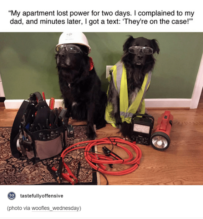 """Human - """"My apartment lost power for two days. I complained to my dad, and minutes later, I got a text: They're on the case!"""" to tastefullyoffensive (photo via woofles_wednesday)"""