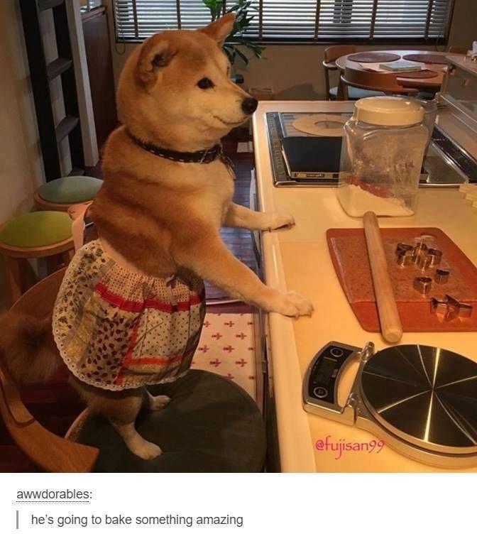 Companion dog - efujisanyy awwdorables: he's going to bake something amazing