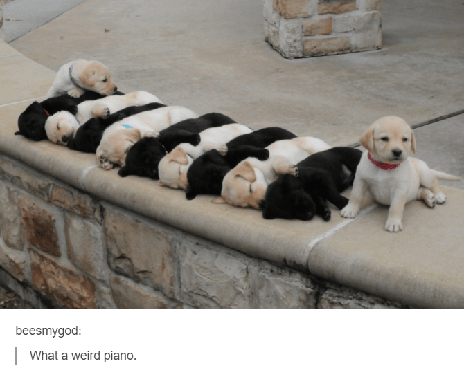 Dog - beesmygod: What a weird piano.