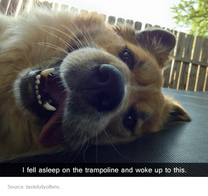 Nose - I fell asleep on the trampoline and woke up to this. Source: tastefullyoffens...