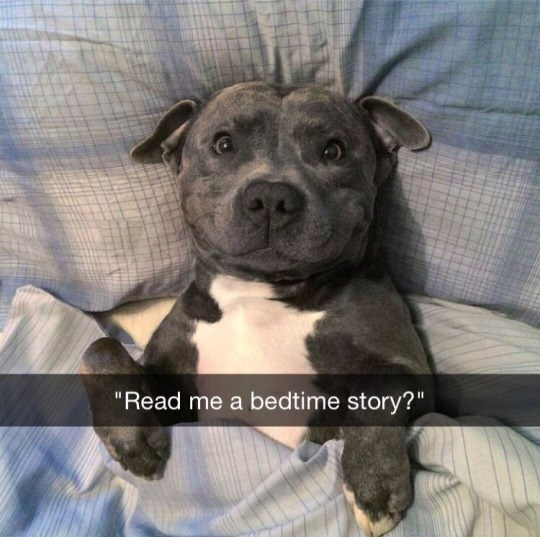 """Dog - """"Read me a bedtime story?"""""""