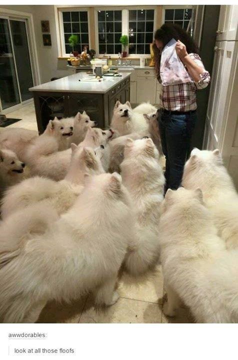 Fur - awwdorables look at all those floofs