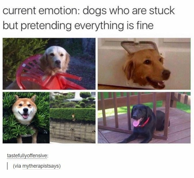Dog - current emotion: dogs who are stuck but pretending everything is fine tastefullyoffensive: (via mytherapistsays)