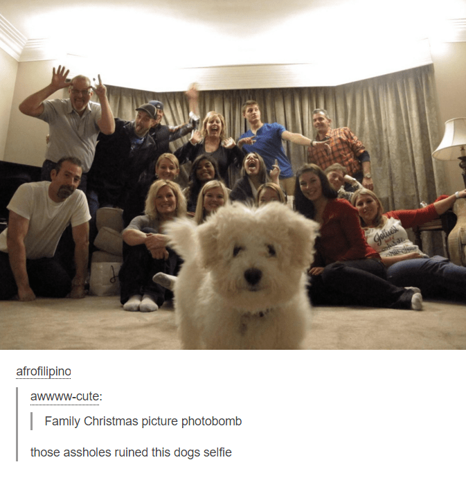 Dog - Gelives afrofilipino awwww-cute: Family Christmas picture photobomb those assholes ruined this dogs selfie