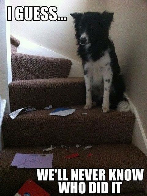 Canidae - IGUESS.c. WE'LL NEVER KNOW WHO DID IT