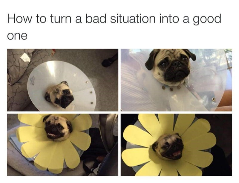 Pug - How to turn a bad situation into a good one