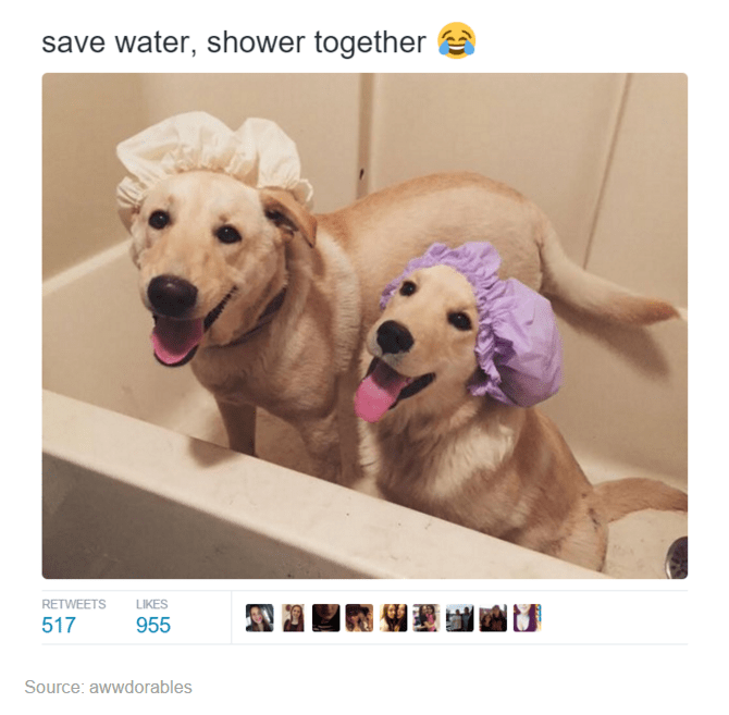 Vertebrate - save water, shower together RETWEETS LIKES 517 955 Source: awwdorables