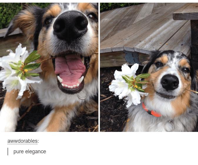 Dog - awwdorables: pure elegance