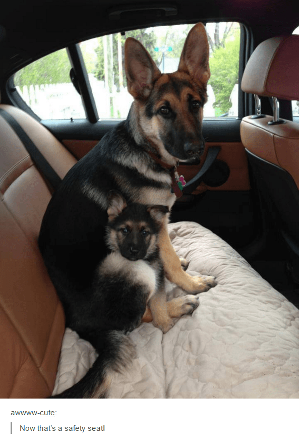 Mammal - awwww-cute: Now that's a safety seat!