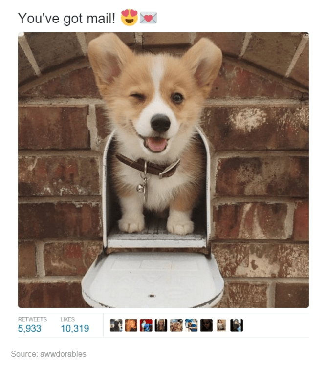 Dog - You've got mail! LIKES RETWEETS 5,933 10,319 Source: awwdorables