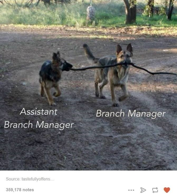 Mammal - Assistant Branch Manager Branch Manager Source: tastefullyoffen... 359,178 notes