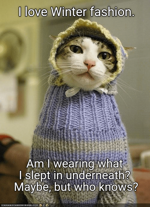 cat,underneath,fashion,wearing,love,winter