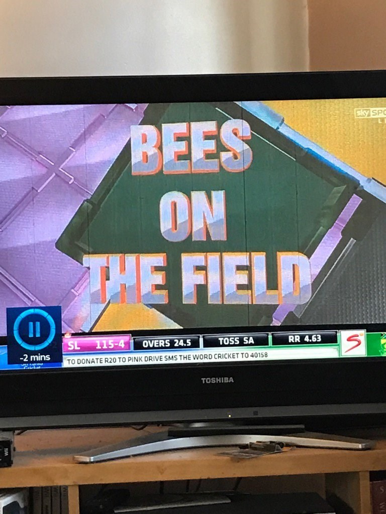 Display device - sky SP BEES ON THE FIELD SL 115-4 RR 4.63 TOSS SA OVERS 24.5 -2 mins TO DONATE R20 TO PINK DRIVE SMS THE WORD CRICKET TO 40158 TOSHIBA