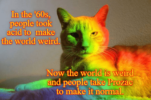 world cat prozac people took 60s acid now caption normal weird - 9007553024