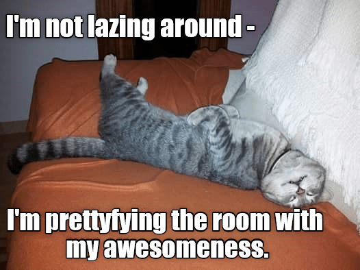 cat prettyfying awesomeness room lazing not caption - 9007557376