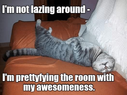 cat room not caption - 9007557376
