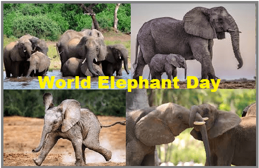 International Elephant Day - A day celebrating the elephants and the importance of conservation along with the dangers their species faces