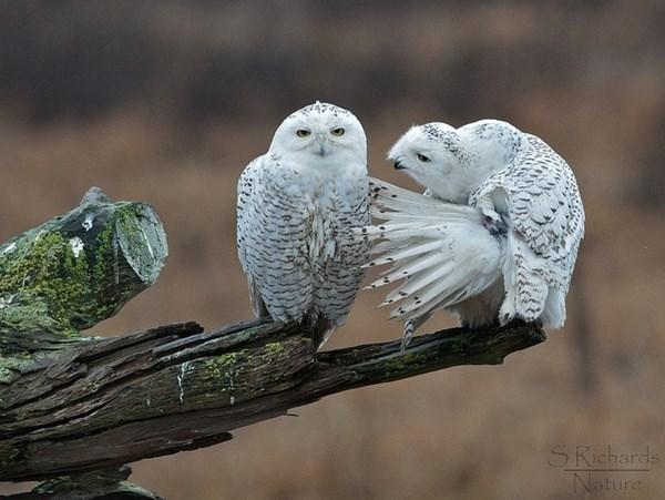 Bird - SRichards Nature