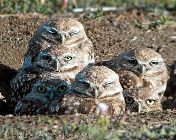 Owl - OTheBrderskRnort.com
