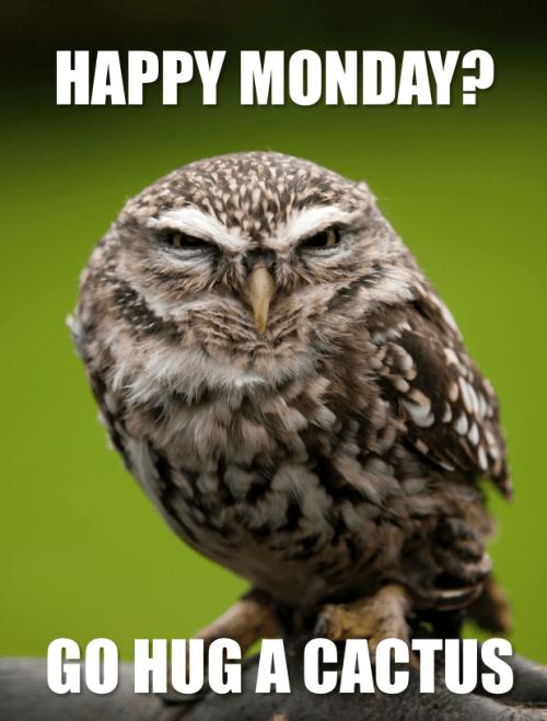 Owl - HAPPY MONDAY? GO HUG A CACTUS