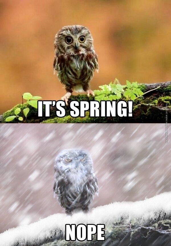 Owl - ITSSPRING! NOPE d at www.veryfunnypics.cu
