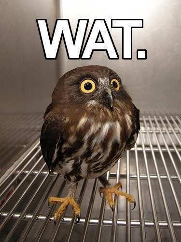 Bird - WAT