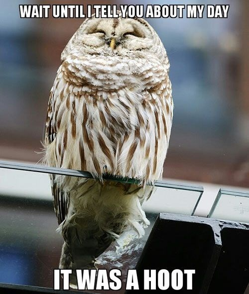 Owl - WAIT UNTILLTELLYOU ABOUT MY DAY ITWAS A HOOT
