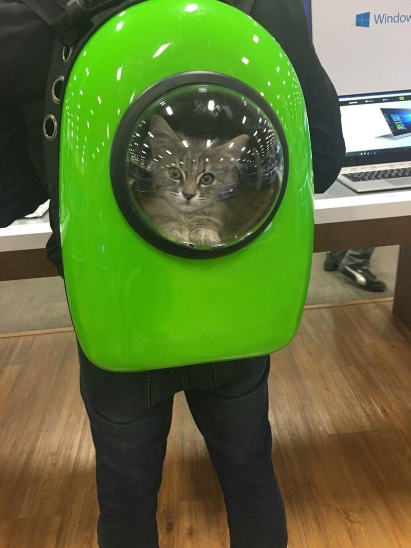 cat in backpack photoshop battle - Green - Window