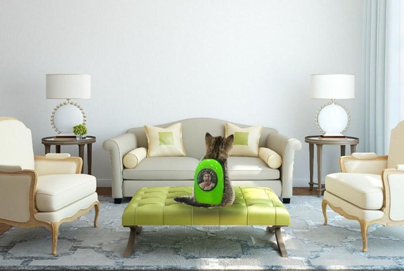 cat in backpack photoshop battle - Living room