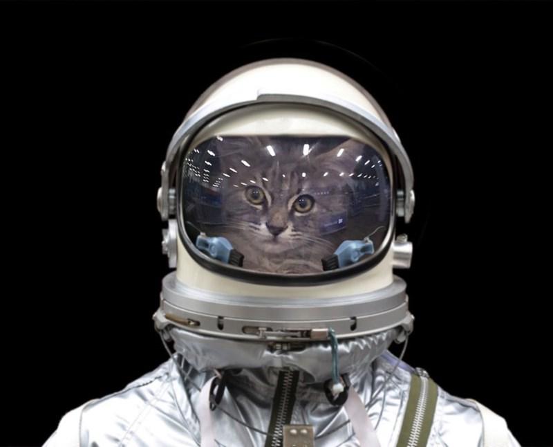 cat in backpack photoshop battle - Helmet