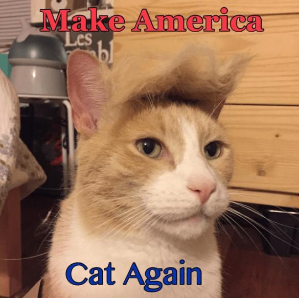Cat - Make America Les bl Cat Again